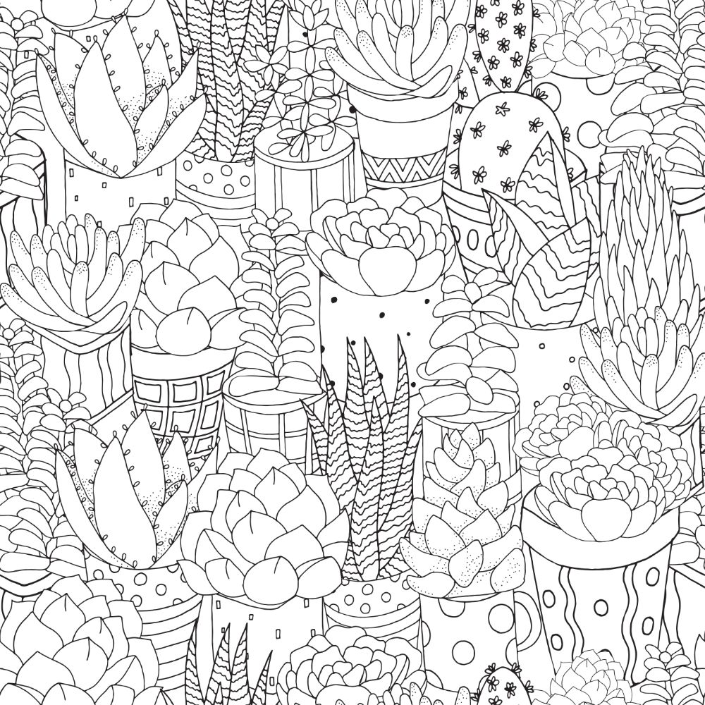Elaborate succulent collection for coloring.