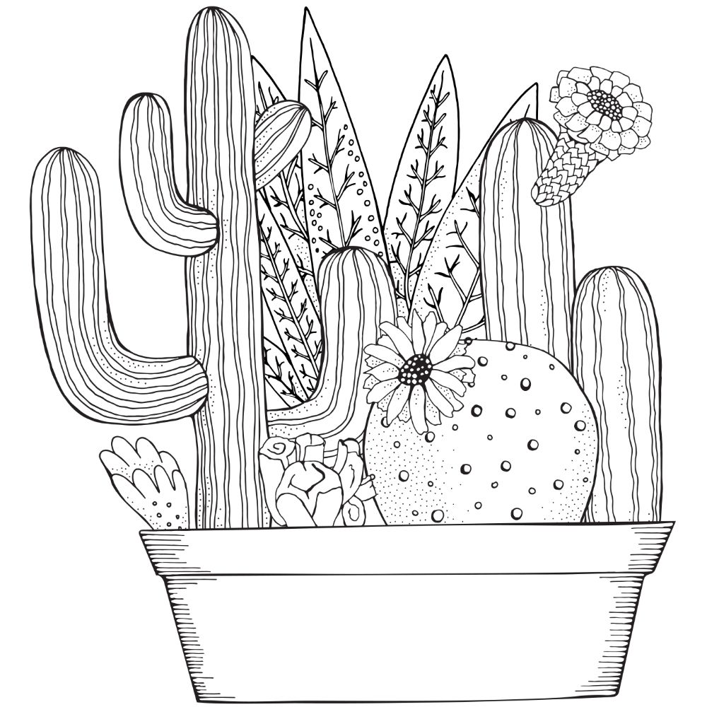 Collection of succulents in a planter (illustration).