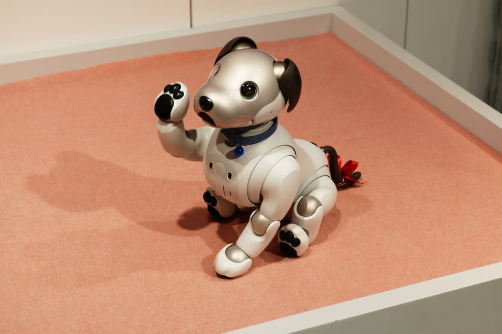 This is a close look at an Aibo robot dog toy on display.