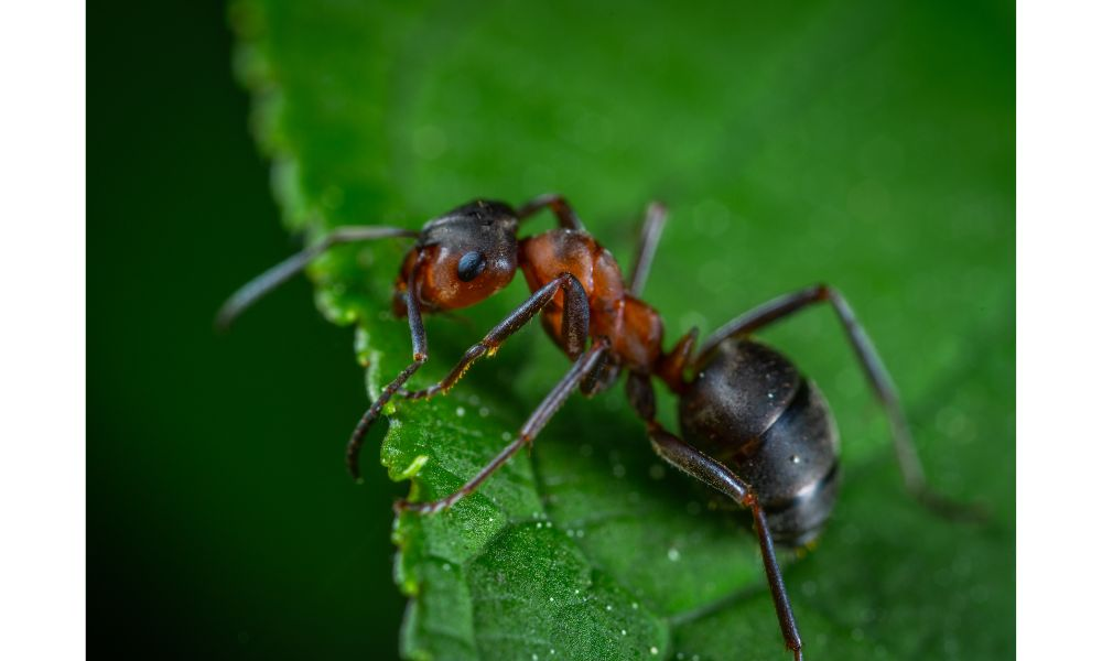 Bug and Leaf.