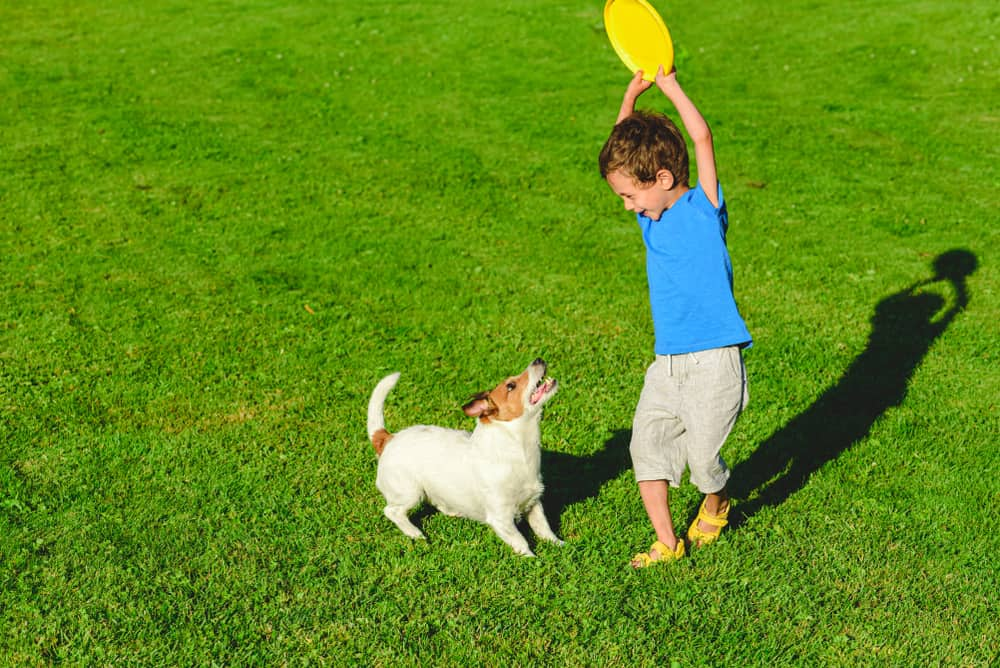 A kid playing Frisbee with his dog.