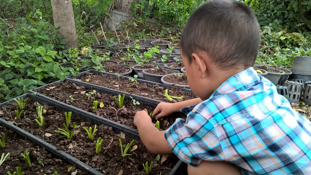 A boy planting seeds at the small garden.