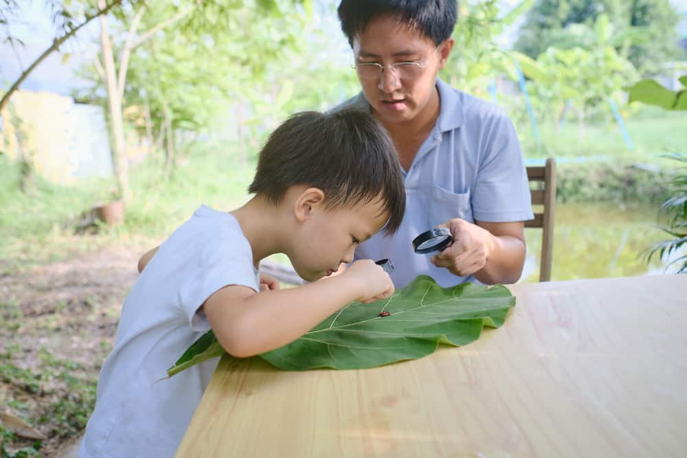 A father and son looking at a leaf with magnifying glasses.