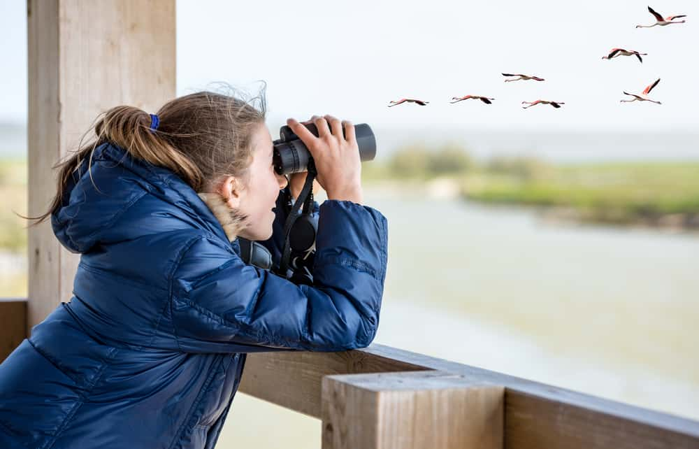 A girl bird watching on a wooden structure.