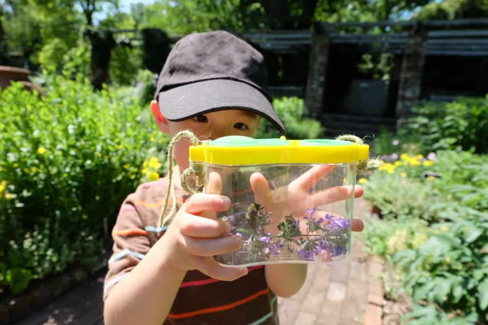 Boy playing with his bugs in a plastic container.