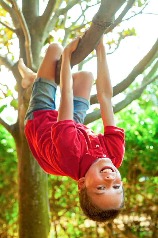 A boy hanging from a tree branch in the backyard.
