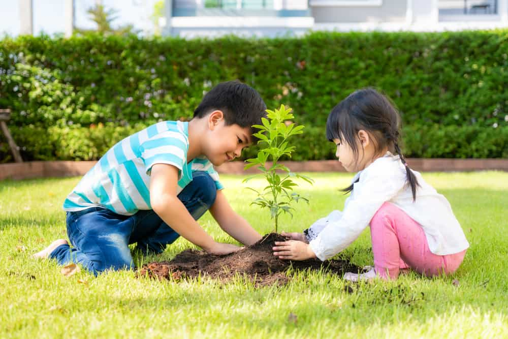 A brother and sister planting a tree in the backyard.
