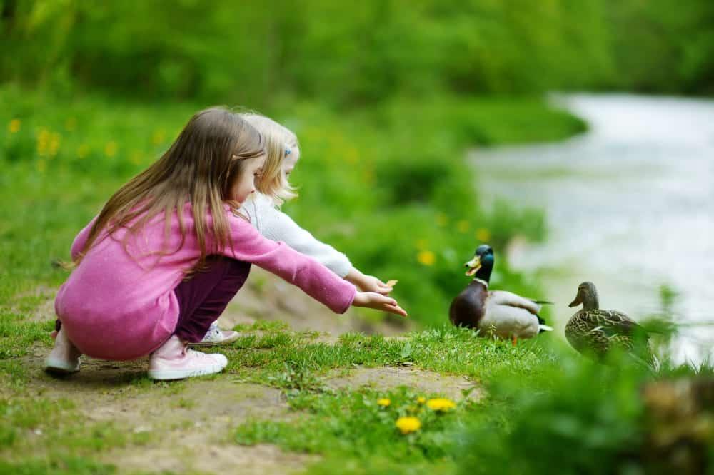 Two girls feeding the ducks.