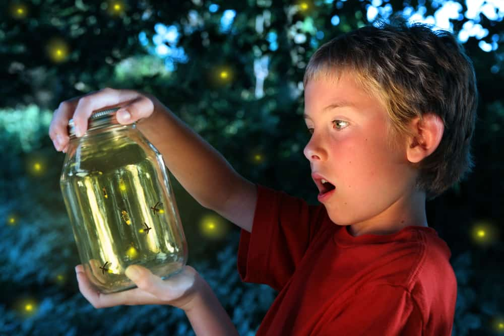 A kid looking at the fireflies he caught.