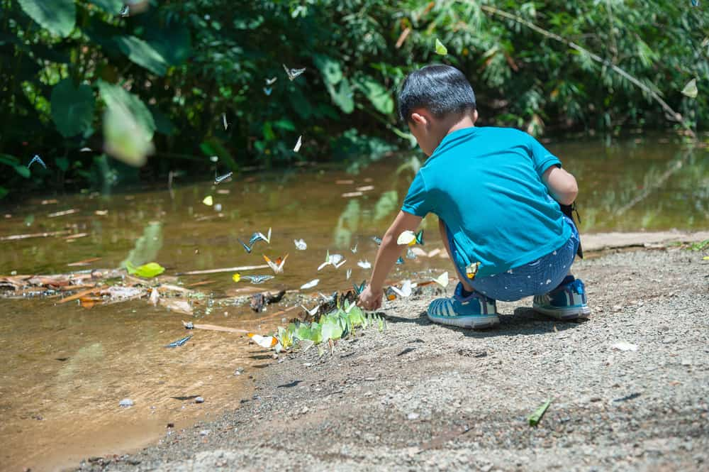 Boy catching butterflies on the pond.