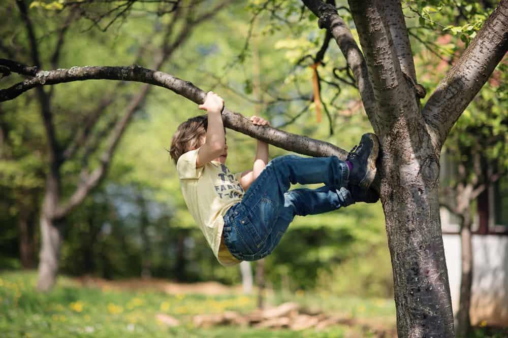 Boy climbing up a tree.