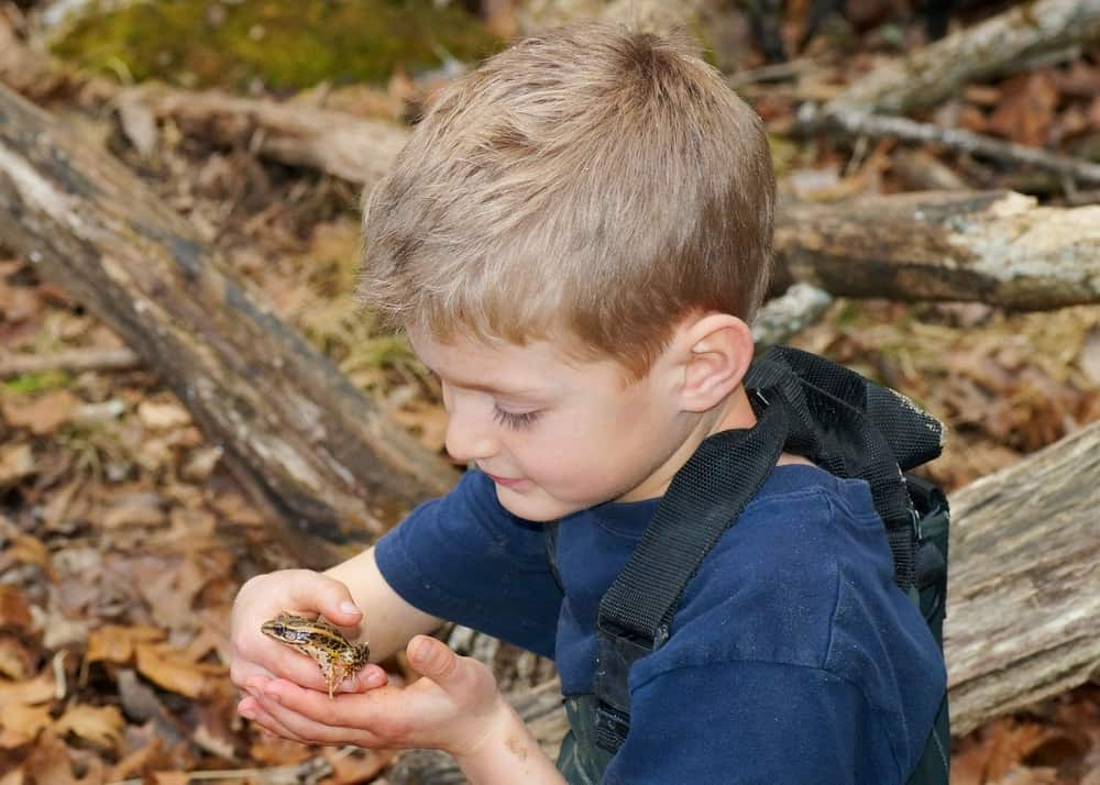 Boy holding a frog in the woods.