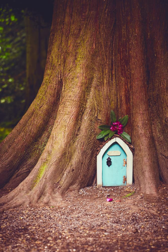 A small fairytale doorway into the trunk of a large tree.