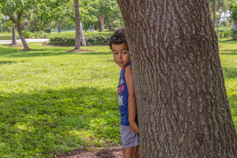 Little boy hiding behind a large tree.
