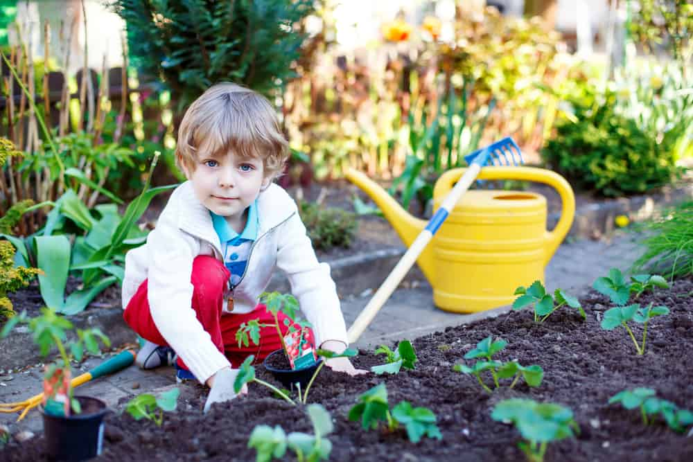 Little boy planting seeds of tomatoes in vegetable garden.