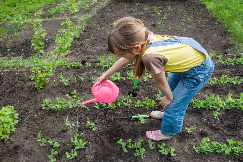 Little girl in the garden watering plants.