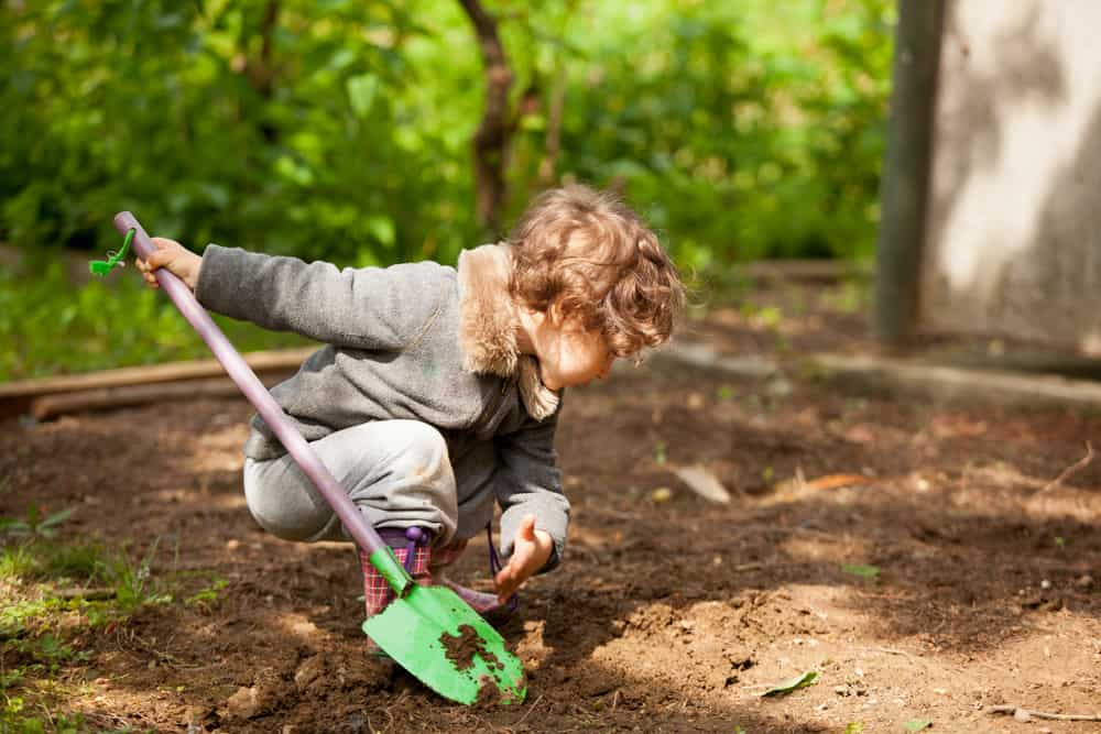 A kid playing with a shovel and digging at the backyard.