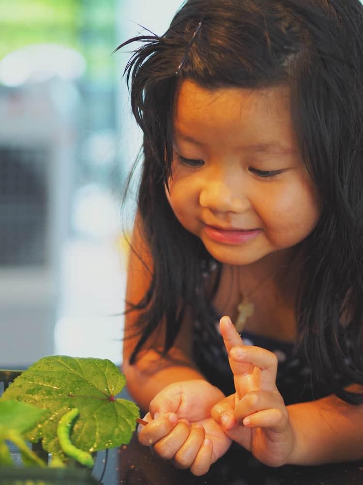 Little girl observing a caterpillar on a green leaf.