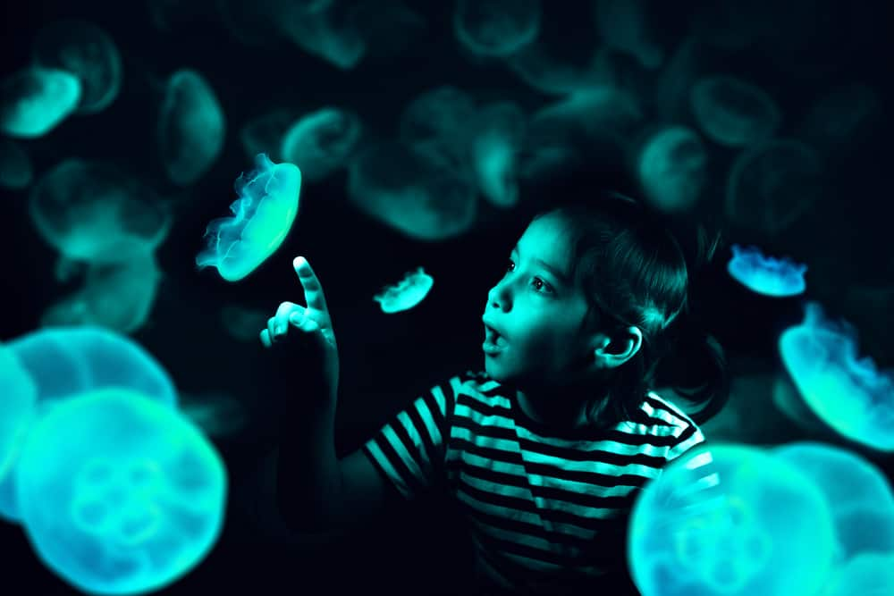 Little boy pointing at one of the glow-in-dark jellyfish.